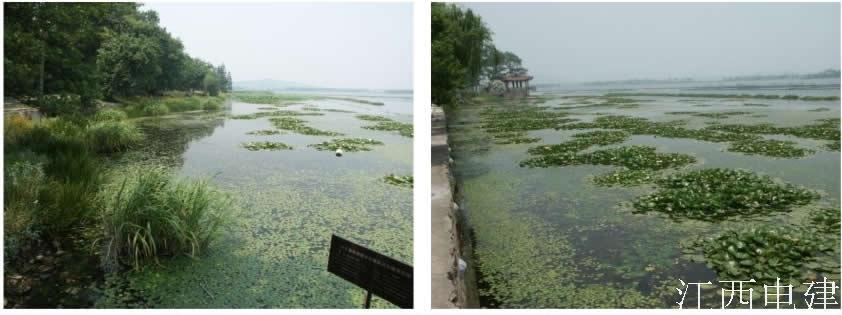 無錫五里湖濕地景觀設計整治前.jpg