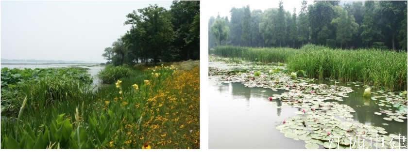 無錫五里湖濕地景觀設計整治后.jpg